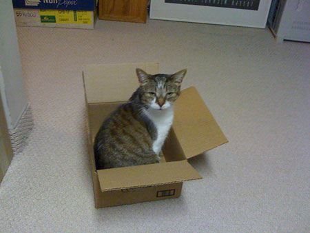 I has a box.